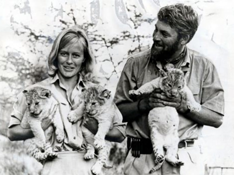 The Adamsons in Born Free